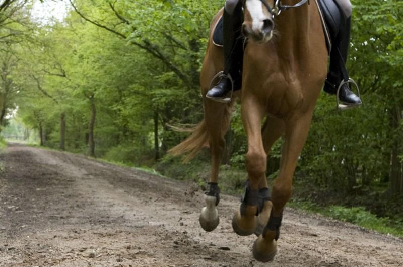Camping Buitenpret - Paardrijden in de natuur