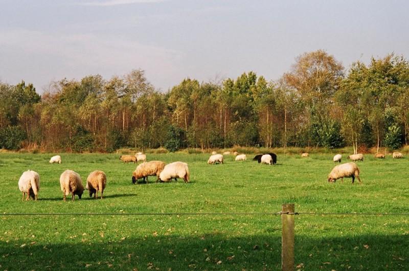 Camping Buitenpret - De prachtige natuur van Drenthe