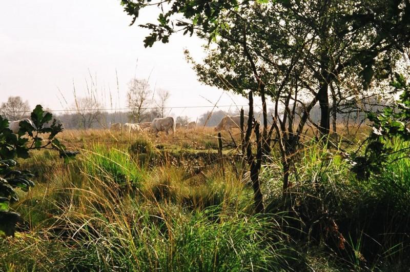 Camping Buitenpret - Maak prachtige wandelingen in de natuur!